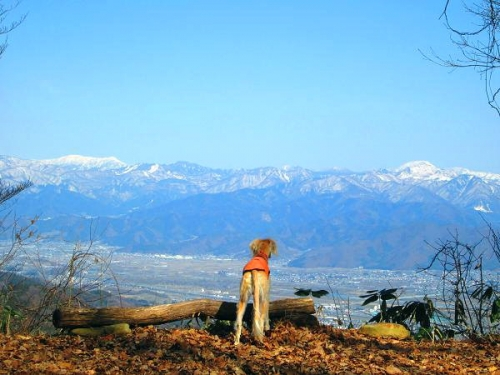 春山からの風景2