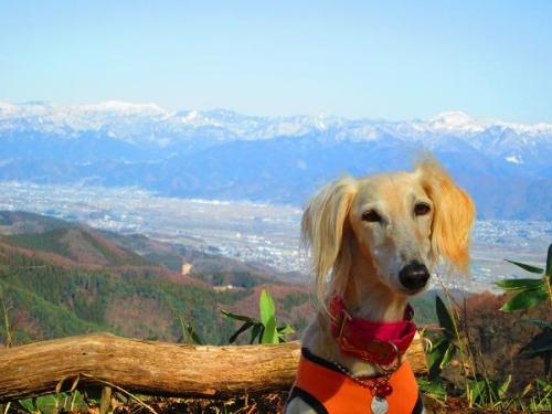 春山からの風景4