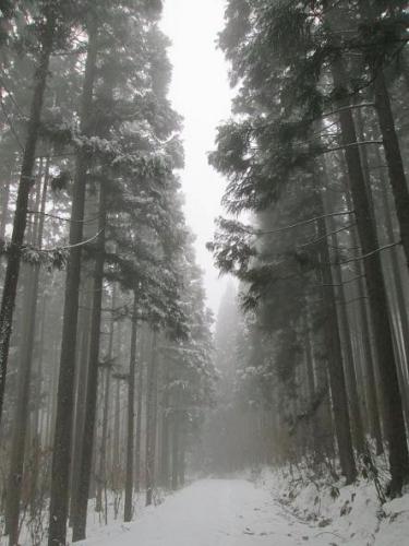 冬霧の里山2