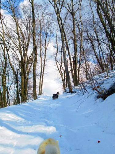 2014冬から春へ4