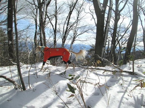 例年通りの積雪1