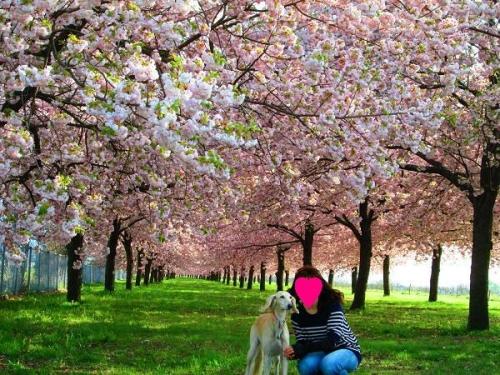 山の桜里の桜13