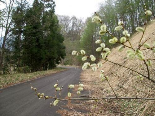 山の桜里の桜1