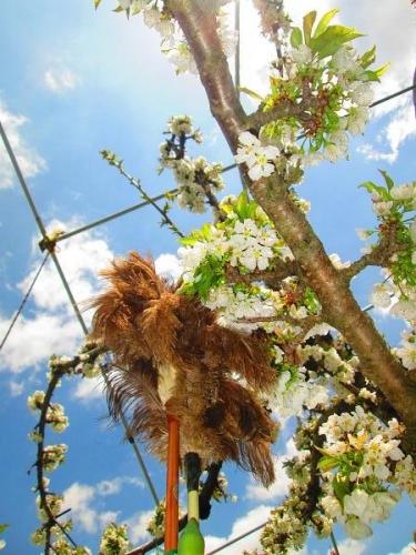 山の桜里の桜20