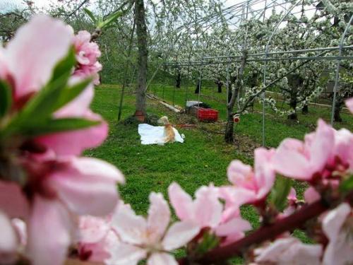 山の桜里の桜21