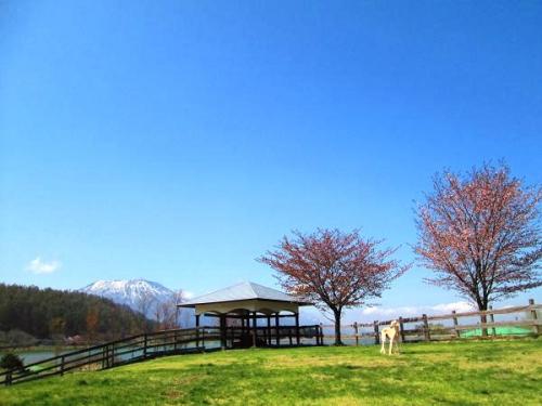 山の桜里の桜24