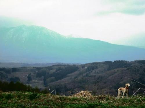 山の桜里の桜5