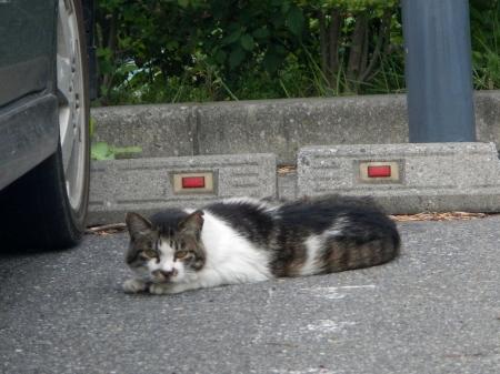 ファインビューの猫1