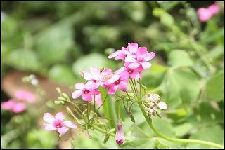 s-Photo02.jpg