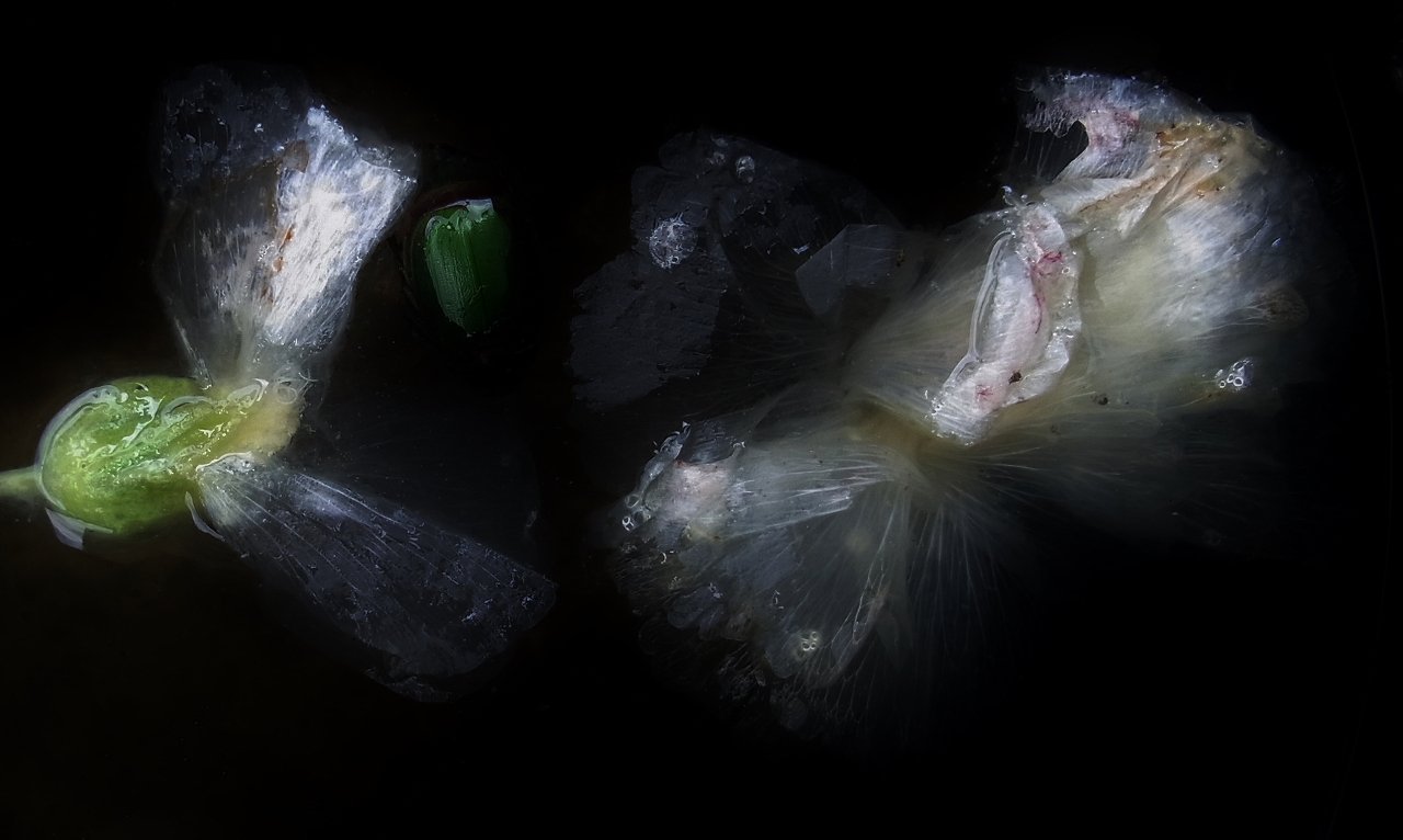 X058.jpg