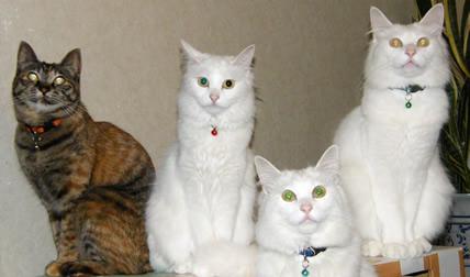 ドラミ一家家族写真