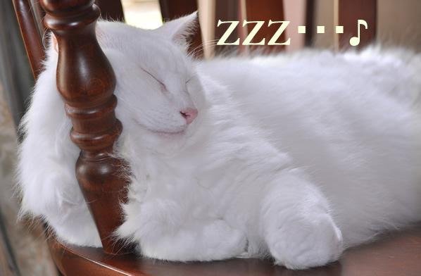 フー太の昼寝姿