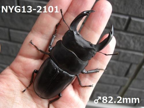 CIMG5898加工済み