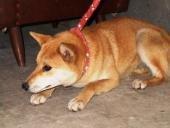 佐賀の犬2