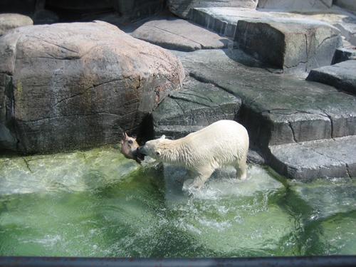 馬の頭 コペンハーゲン動物園
