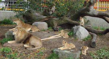 ライオン殺処分