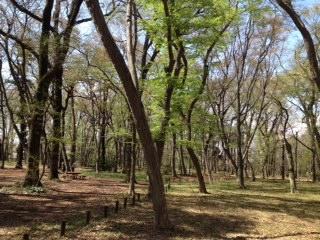 神代雑木林