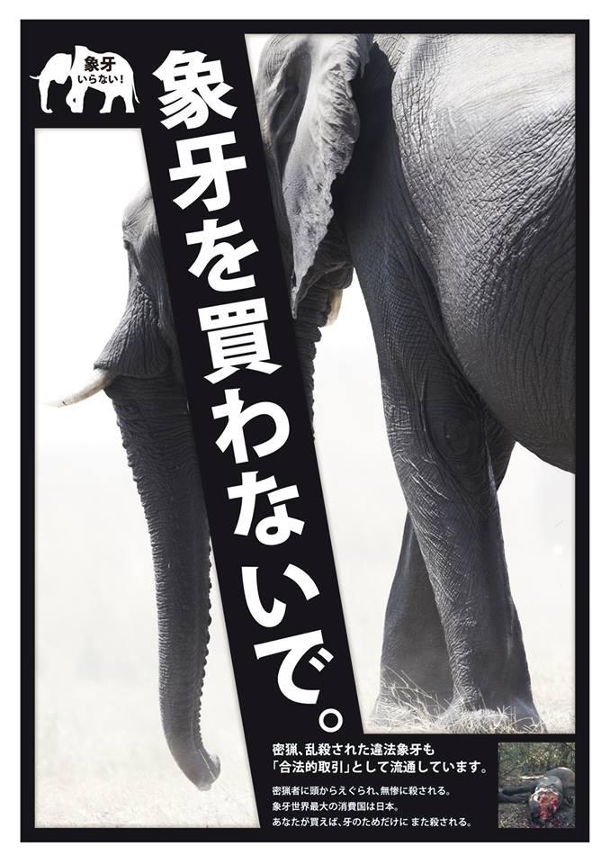 象牙を買わないで