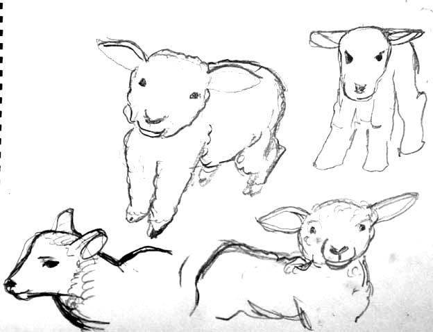 20140712 デッサン 子羊 22㎝ DSC01417