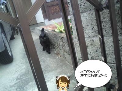 猫ちゃん来た!