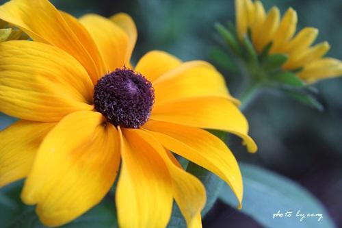 IMG_2014_07_18_9999_55黄色い花2