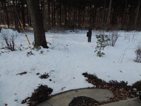 5-雪の後1