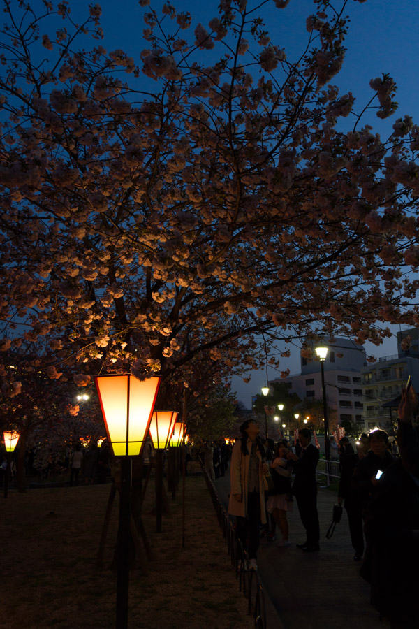 20140429-3_桜_3