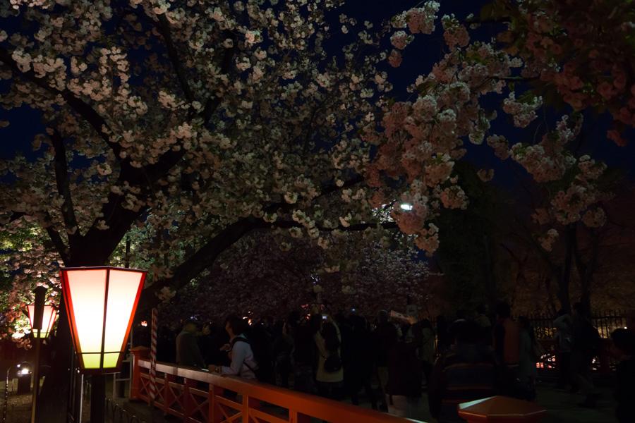 20140502-2_桜_1