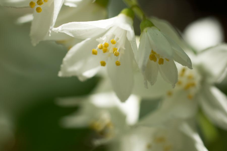 20140503-2_白い花_1