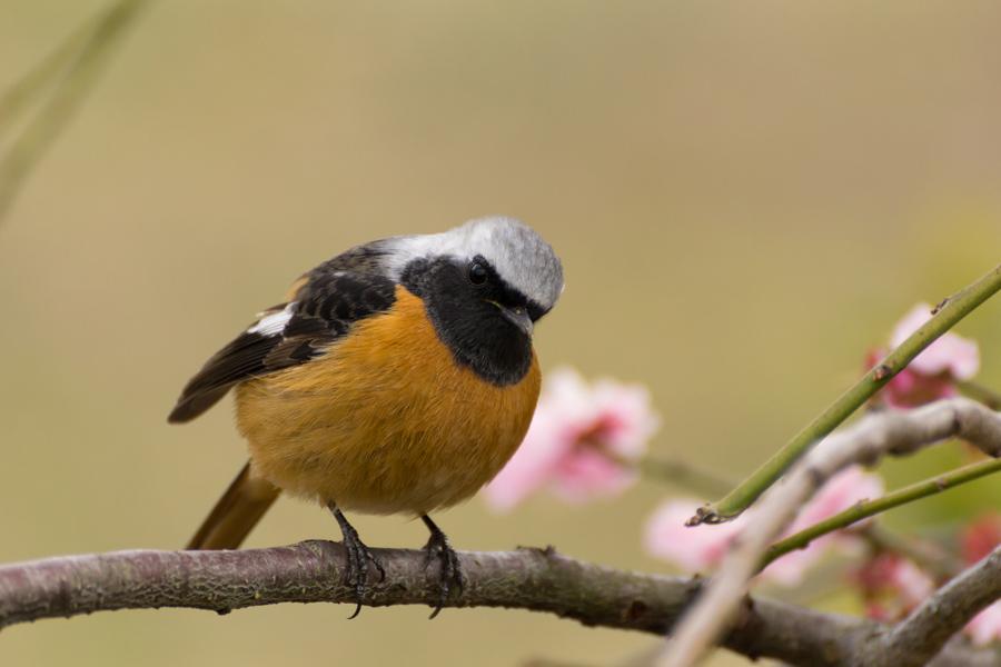 20140507_野鳥たち_1
