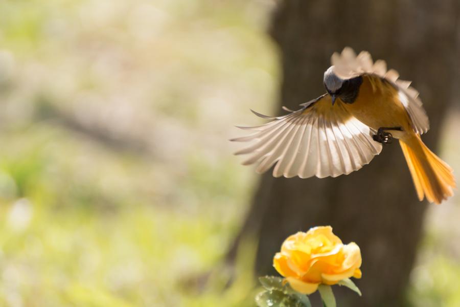 20140507_野鳥たち_3
