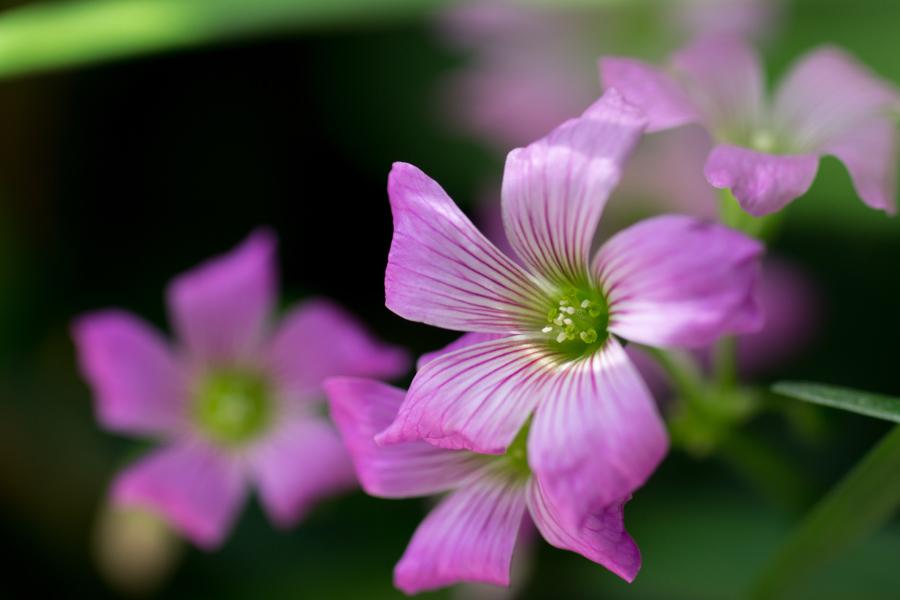 20140618_紫の花_1