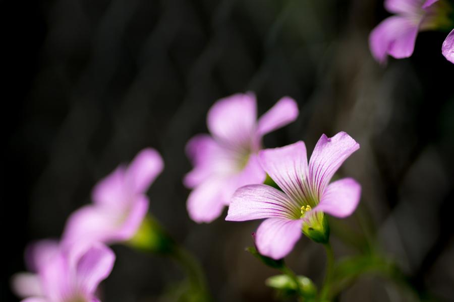 20140618_紫の花_2