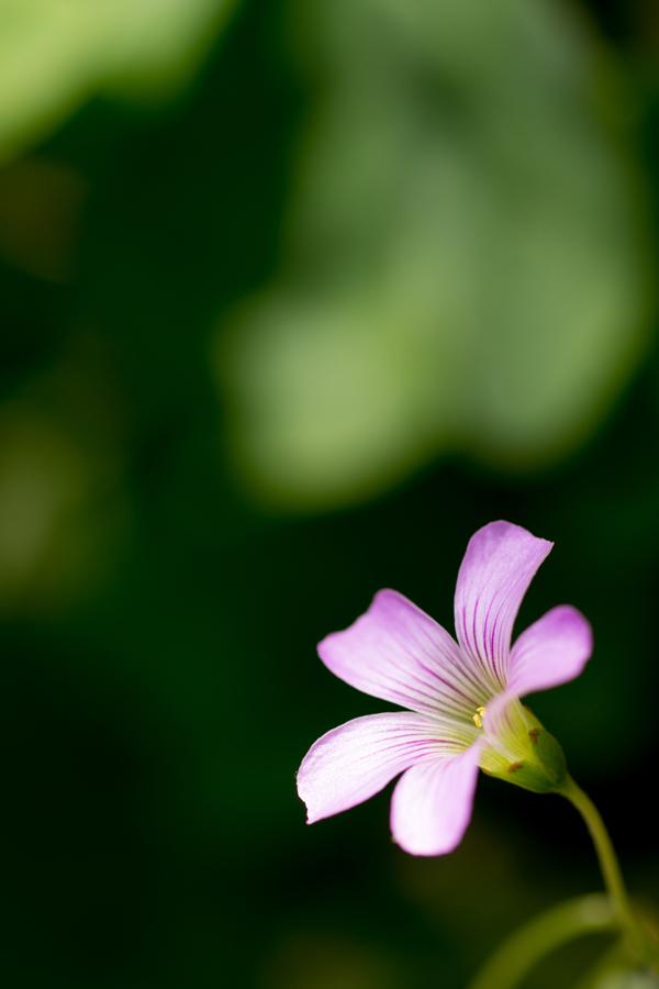 20140618_紫の花_3