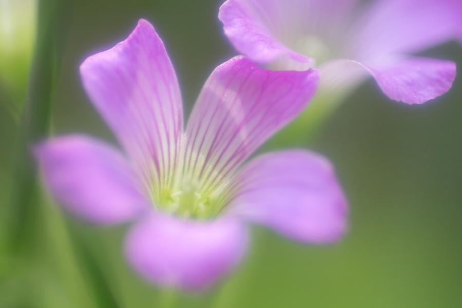 20140618_紫の花_4