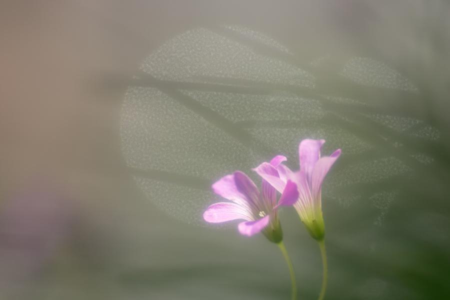 20140618_紫の花_5
