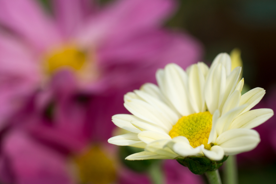 20140620-2_白い花たち_1