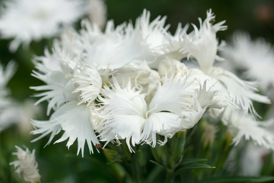 20140620-2_白い花たち_4