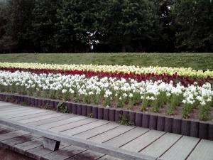 長居公園 植物園(2011年)より 金魚草