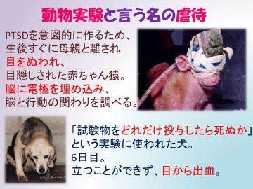動物実験1 (360x270)