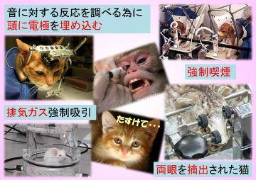 動物実験2 (360x254)