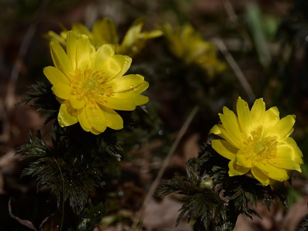 SHU_3096.jpg