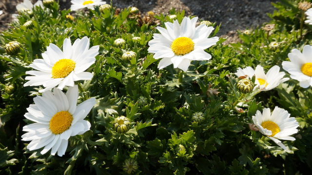 植物27枚目 640x360サンプル