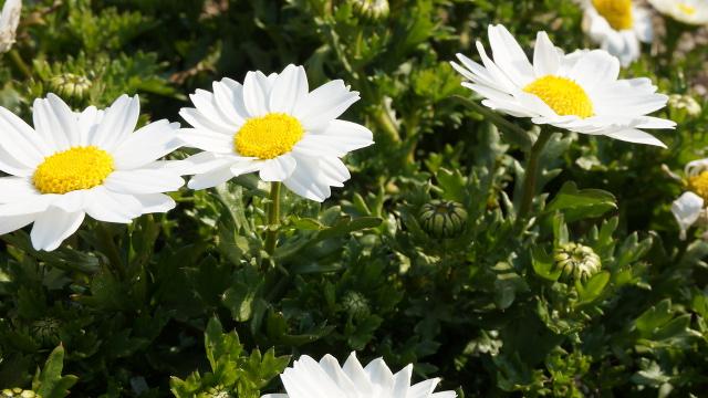 植物28枚目 640x360サンプル