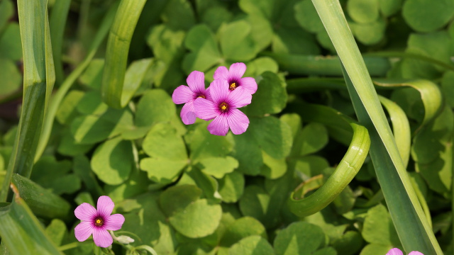植物44枚目 640x360サンプル
