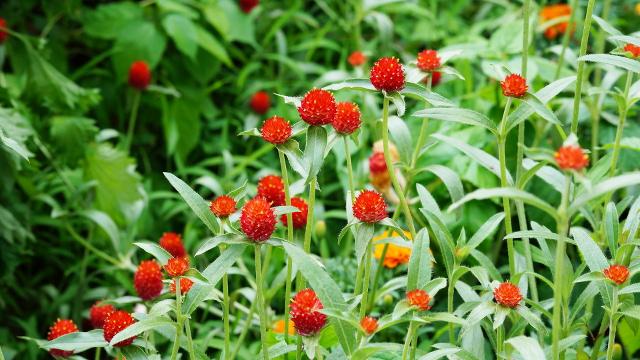 植物114枚目 640x360サンプル