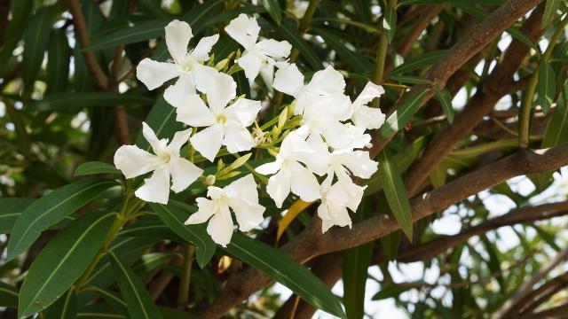 植物117枚目 640x360サンプル