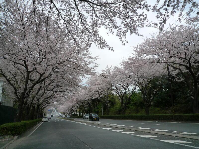 20140405-01-桜