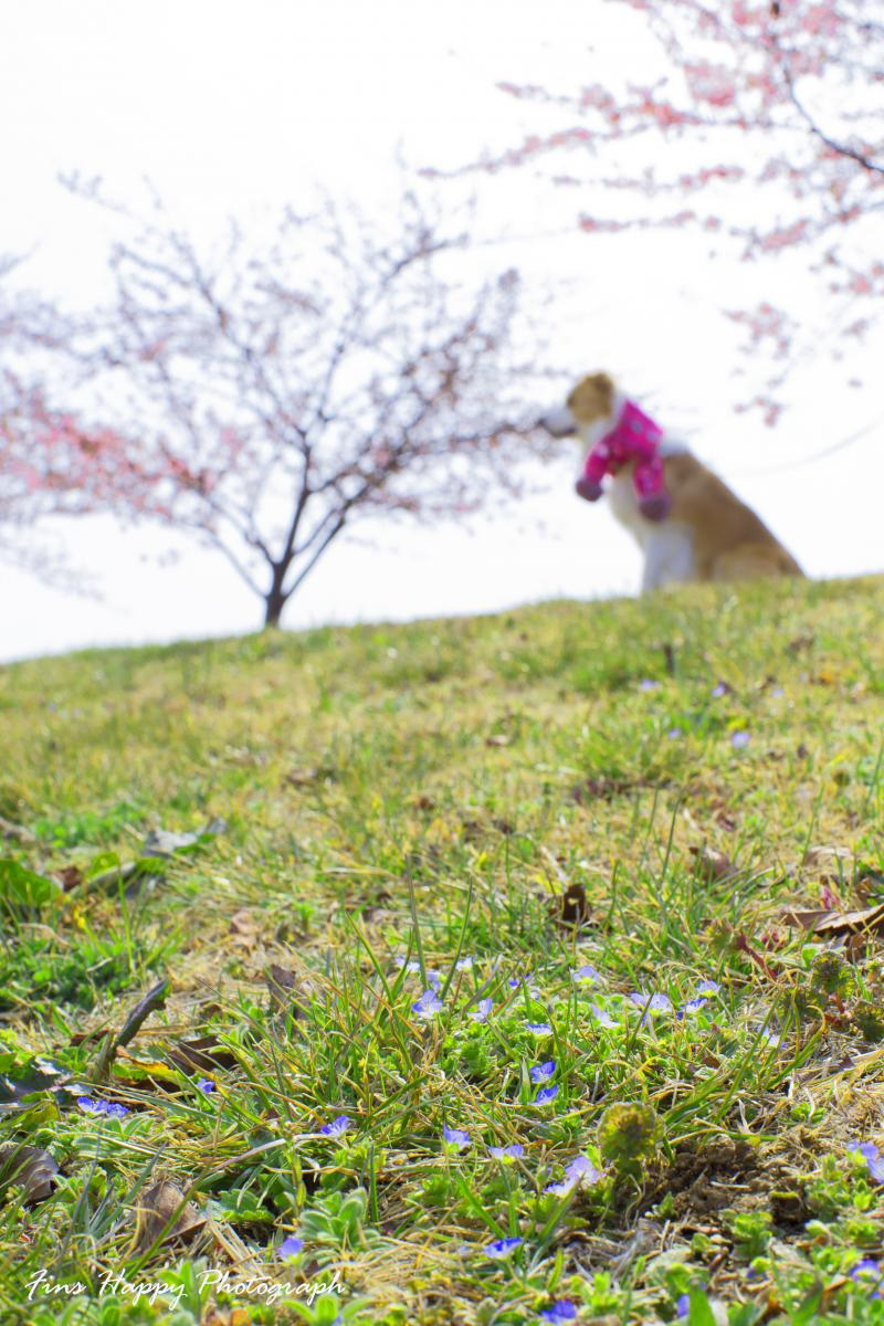 小さな春のメロディー