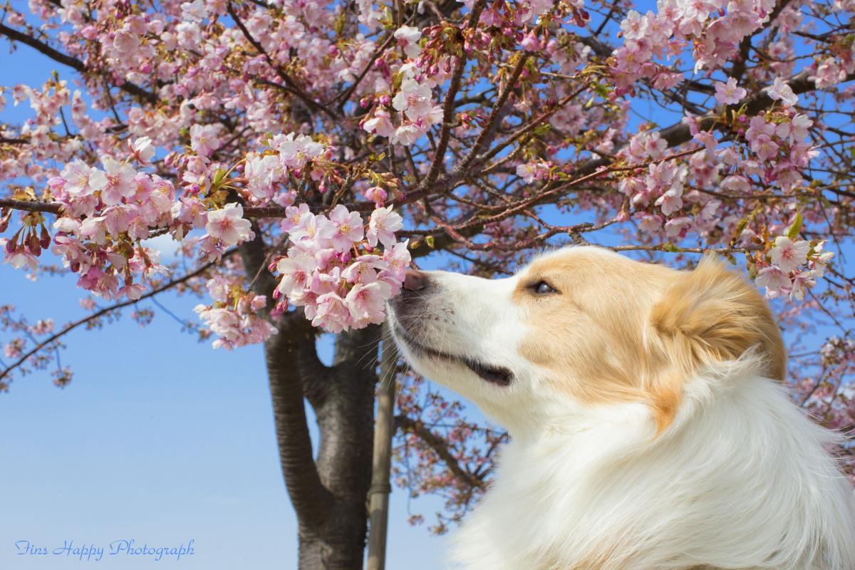 春の訪れを確かめる